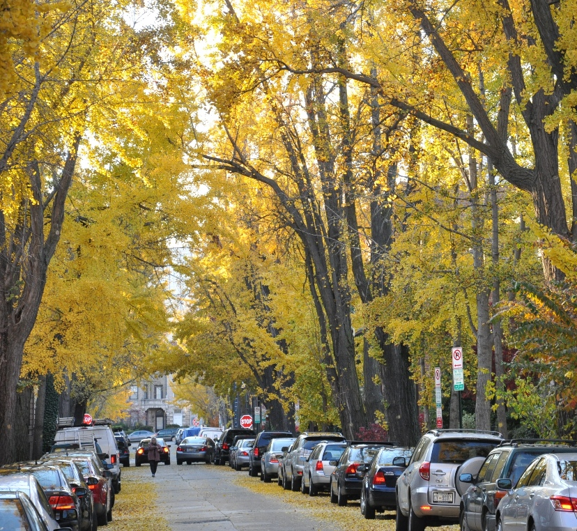 Credit: District Department of Transportation